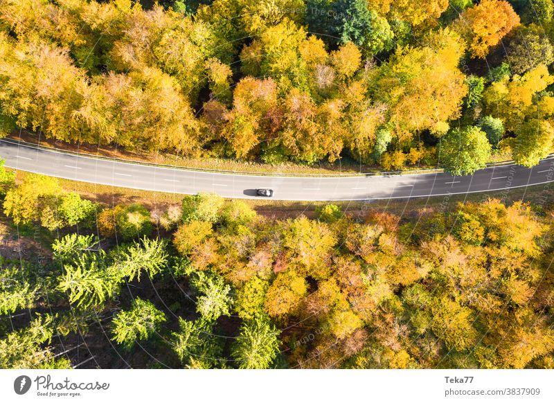 a autumn forest street with a car top down from above street from above car on a street fast car street top down traffic forest from above in the sun