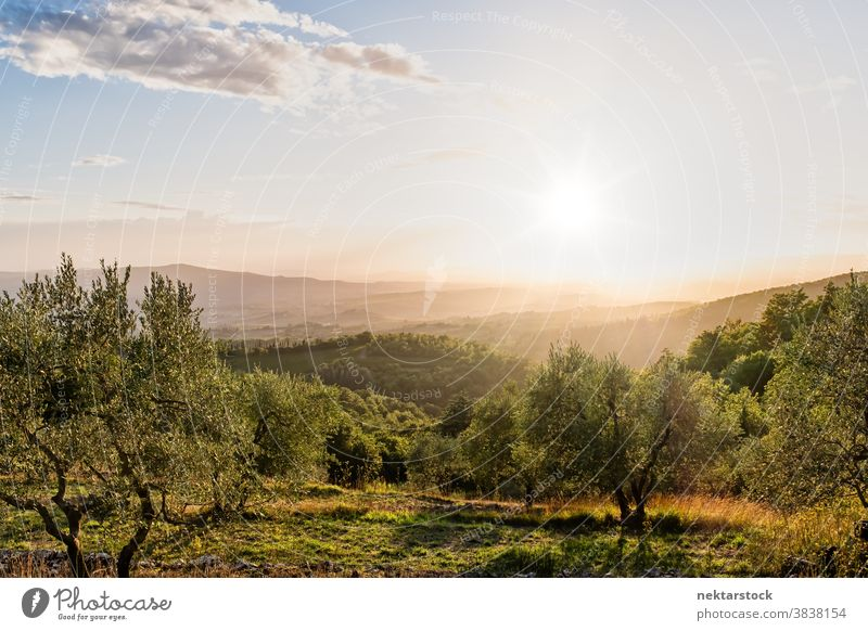 Rural Tuscany Landscape in Summer sun sky landscape cloudscape horizon Italy crop rural foliage verdant Europe day natural lighting sunny summer picturesque