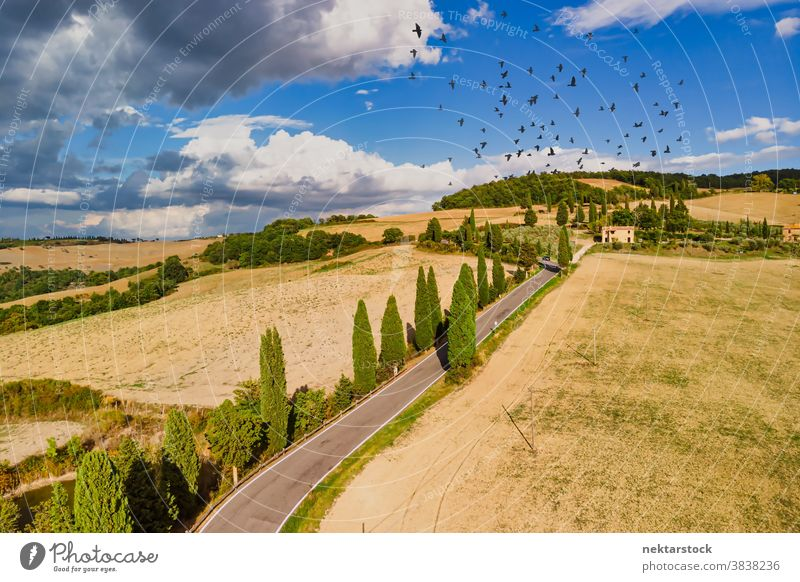 Fields and Road with Bird Flock in Summer Sky in Tuscany Italy road agriculture field flock bird rural farmland sky good weather countryside road less travelled