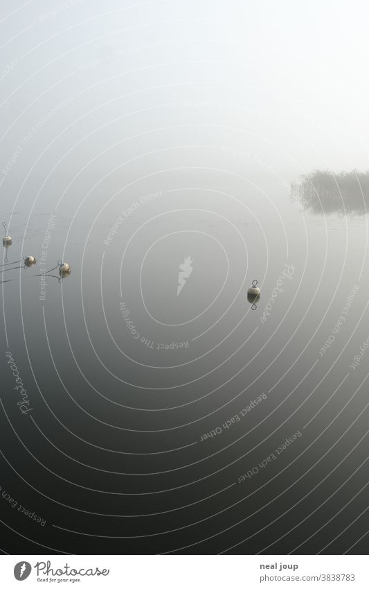 Lake in the fog Landscape Water Nature tranquillity Moody in the morning Fog Mysterious Mystic Loneliness Deserted Calm silent Dream Poetic Idyll