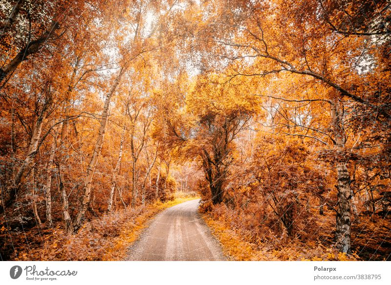 Forest trail in a forest in the fall sunlight day water design november woodland beams forrest autumn forest gold maple vibrant pathway outdoor rural scenic