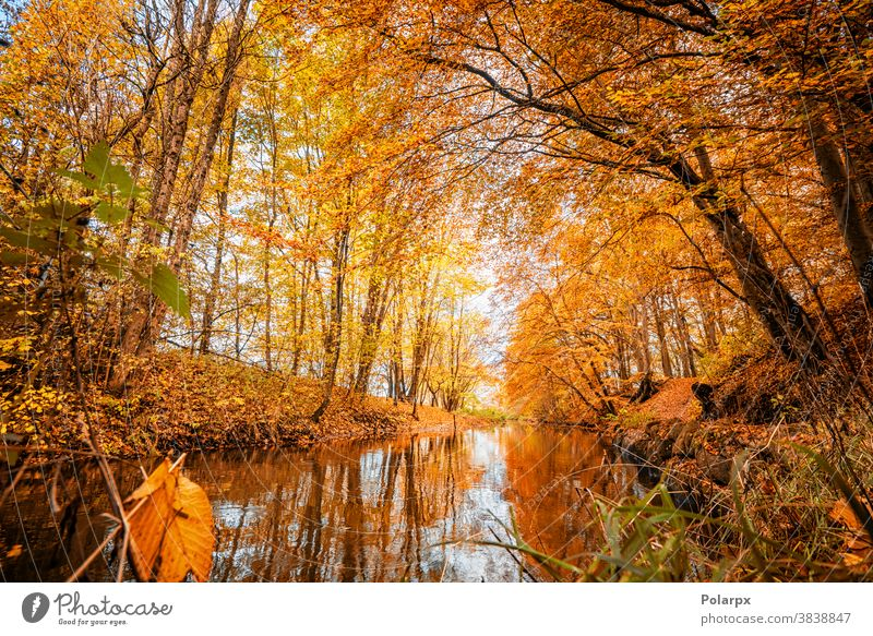 Colorful autumn season colors in the forest peaceful tourism branch flowing mountains october woodland rural golden reflection plant beauty grass wallpaper