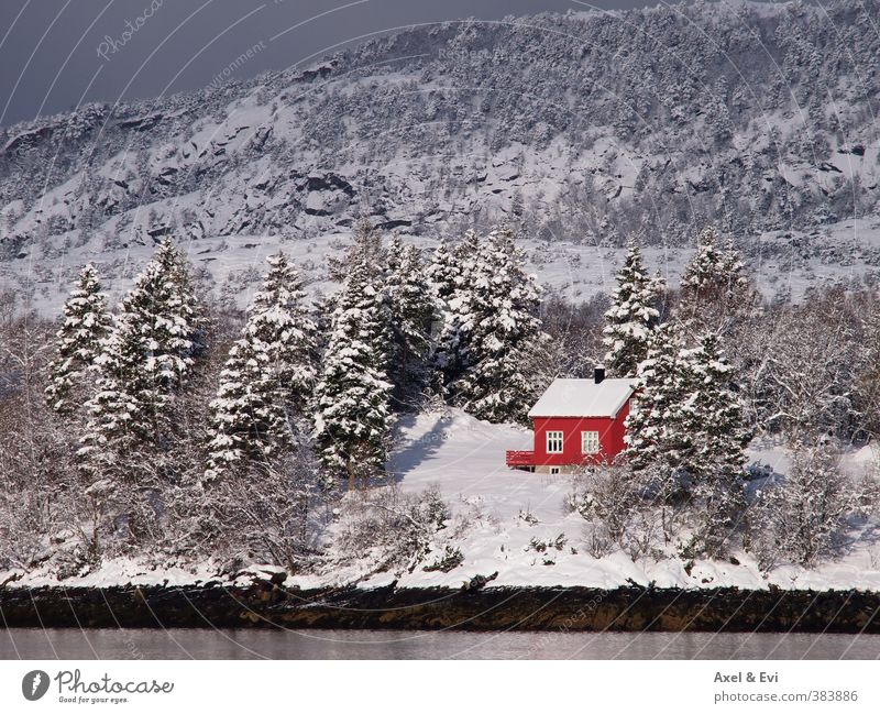 Lonely cottage Cruise Sun Mountain House (Residential Structure) Landscape Winter Beautiful weather Snow Tree Forest Coast Bright Red Peaceful Loneliness Idyll