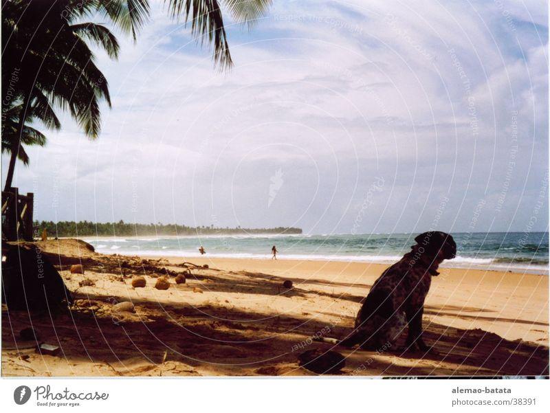 doggie eyes Ocean Beach Dog Palm tree Sand