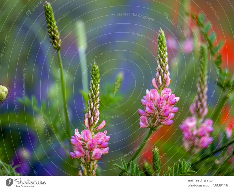 Pink flowers Nature Experiencing nature Landscape Meadow Meadow flower Flower Flower meadow sunny Summer sea of flowers blossom Grass Park wild flowers Idyll