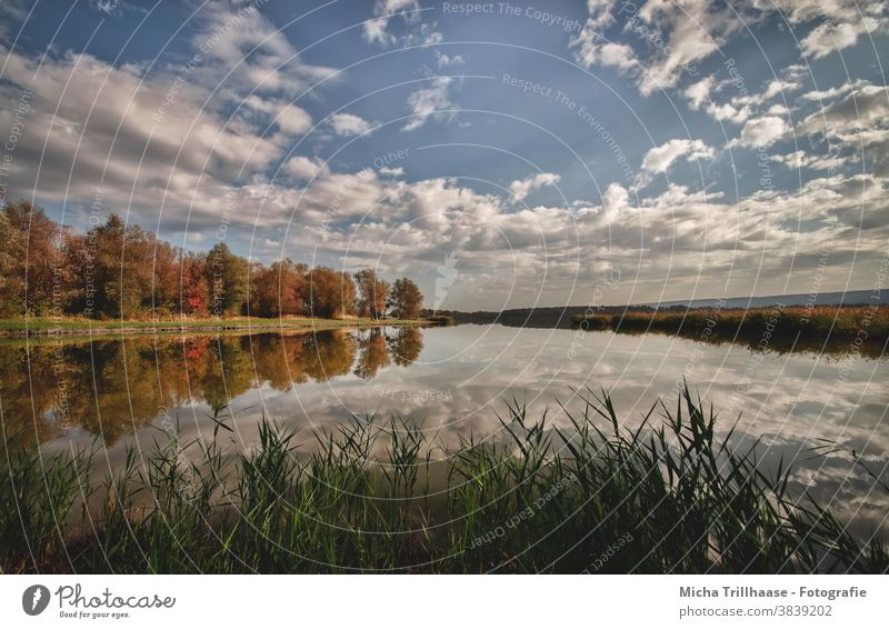 Autumn at the lake Lake Dachwig Thuringia Water Sky Clouds Autumnal Reflections reflections trees bank Autumn leaves reed Nature Landscape tranquillity Idyll