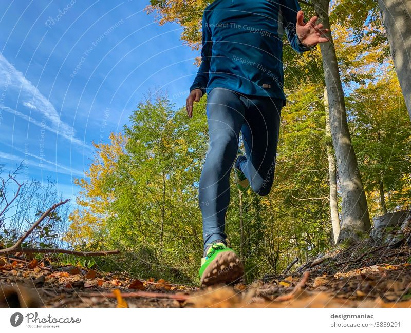 Jogging in autumn Walking trail Autumn Autumnal Forest Sky Woodground Sneakers Tree Worm's-eye view Running Headless sunny sunny day Green Yellow Exterior shot
