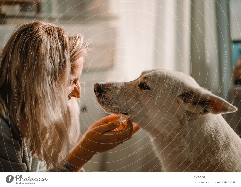 Young woman stroking her dog Dog Shepherd dog White Affection Love Pet Cuddling Caress Playing Friendship Together Happy Colour photo Animal Cute Embrace