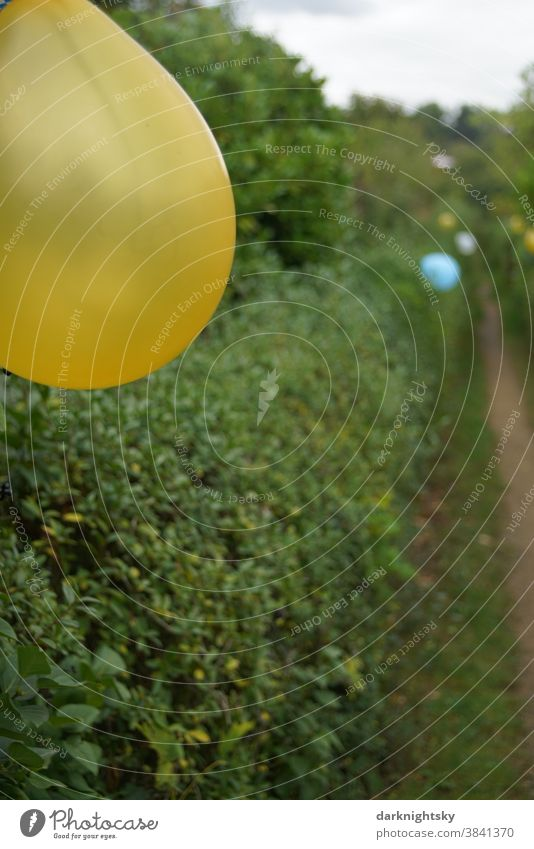 Path decorated with balloons and accompanied by hedges Garden Party Firm yellow blue Decoration celebrations out Exterior shot Feasts & Celebrations