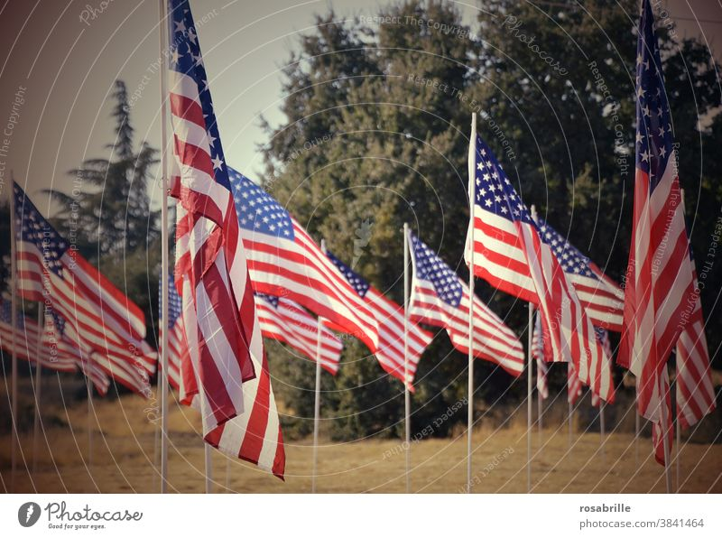 just missed | the election in the USA 2020 Americas Flag flags choice nationalism Many Blow Memory Patriotism dunning memorial symbol banner stars Stripe Pride
