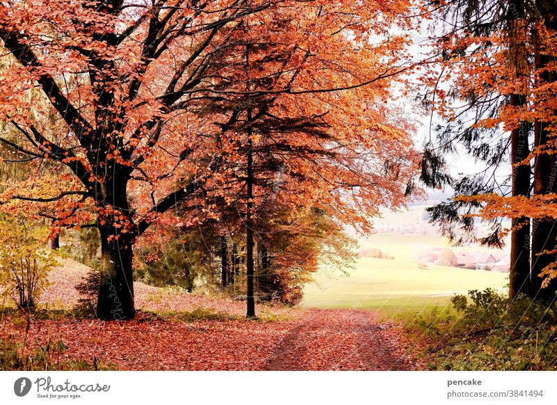 schau time Herbst Wald Herbstfarben Weg Waldrand rot Buche orange Landschaft Allgäu strahlend bunt schauen Durchblick Baum