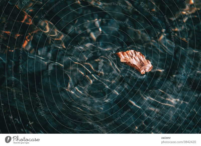 Detail of a brown dried leaf floating on the surface of the water water surface light light reflections water reflections undulations waves underwater aquatic