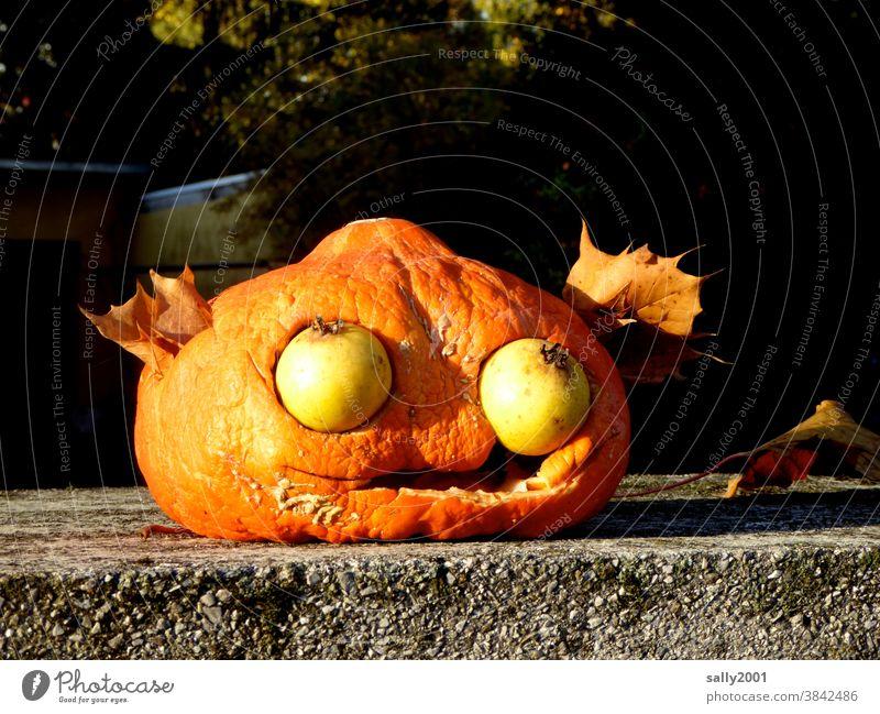 Beginning of autumn... Pumpkin Hallowe'en Thanksgiving Autumn Start of autumn Vegetable Decoration Harvest Leaf Face Art Eyes fruit Fruit fruits seasonal Orange
