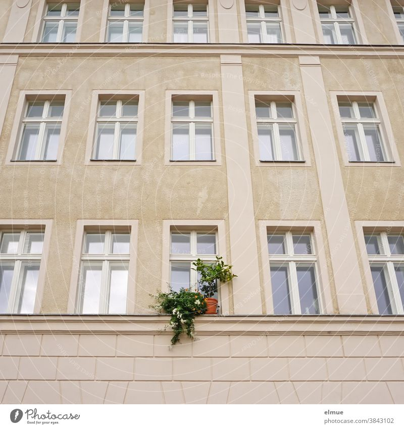 His green plants on the windowsill broke through the almost sterile effect of the window facade of the renovated old building Window WindowFacade Foliage plant
