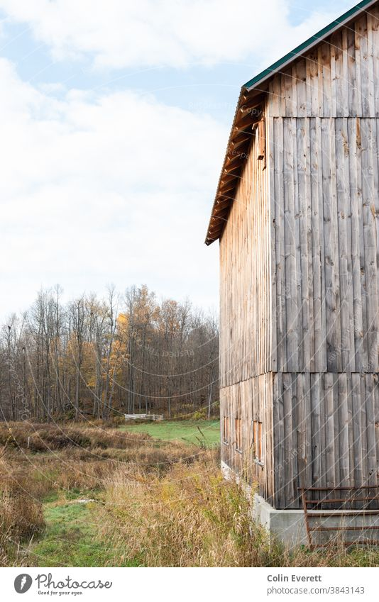 Barn in the woods during the fall barn autumn relaxing minimal Autumn background nature season white seasonal Nature lifestyle Minimal still life october