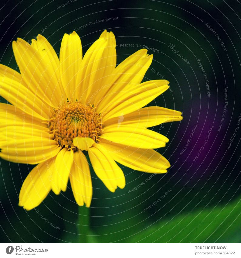 Nature Beautiful Green Plant Summer Sun Flower Yellow Love Blossom Happy Healthy Garden Dream Park Illuminate