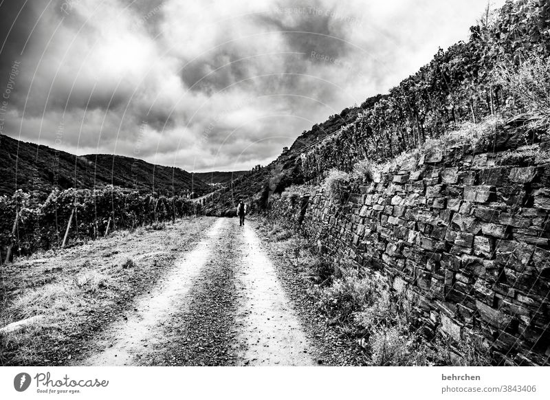 when the way is the goal Lanes & trails Impressive outlook Vantage point Dark Hiking Forest Vacation & Travel Black & white photo Dramatic Nature Exterior shot