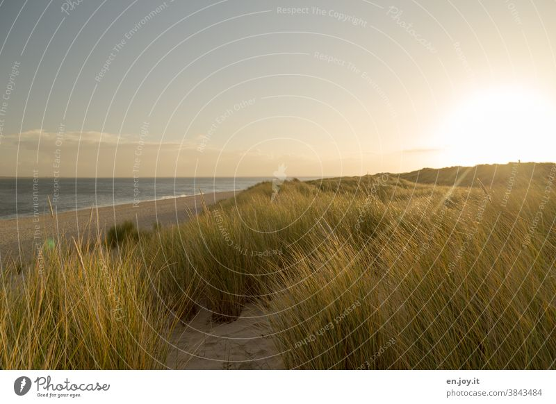 In the morning in the dunes at the deserted beach Beach Ocean Sun Sylt elbow Sunrise sunshine Back-light Grass Vacation & Travel Sky Landscape North Sea coast