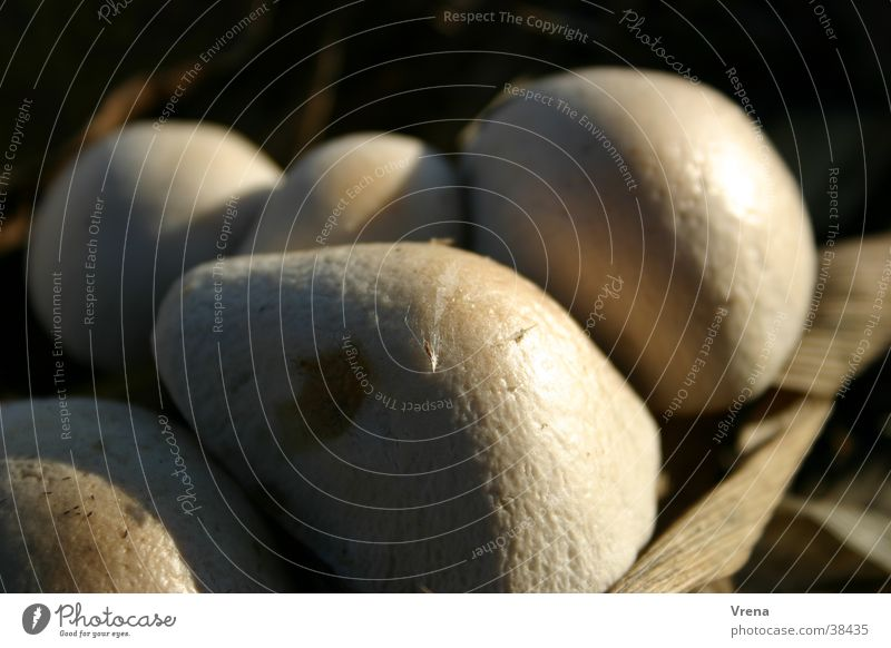 mushroom heads Bulge Light Mushroom Button mushroom Mushroom cap Sphere Shadow Macro (Extreme close-up) agglomeration