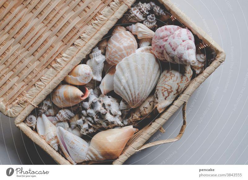 abgestorben | mein schatz! Muscheln Schneckenhaus Muschelschalen Meer Truhe Schatztruhe Korb Sammlung Erinnerung Hülle Meerestiere Strand Ozean Urlaub