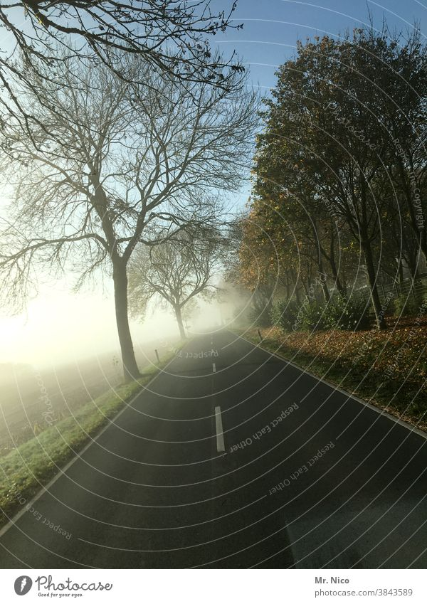 on the road Street Transport Speed Driving Road traffic Traffic infrastructure Country road Asphalt Nature Landscape Tree Field Fog Lanes & trails Environment