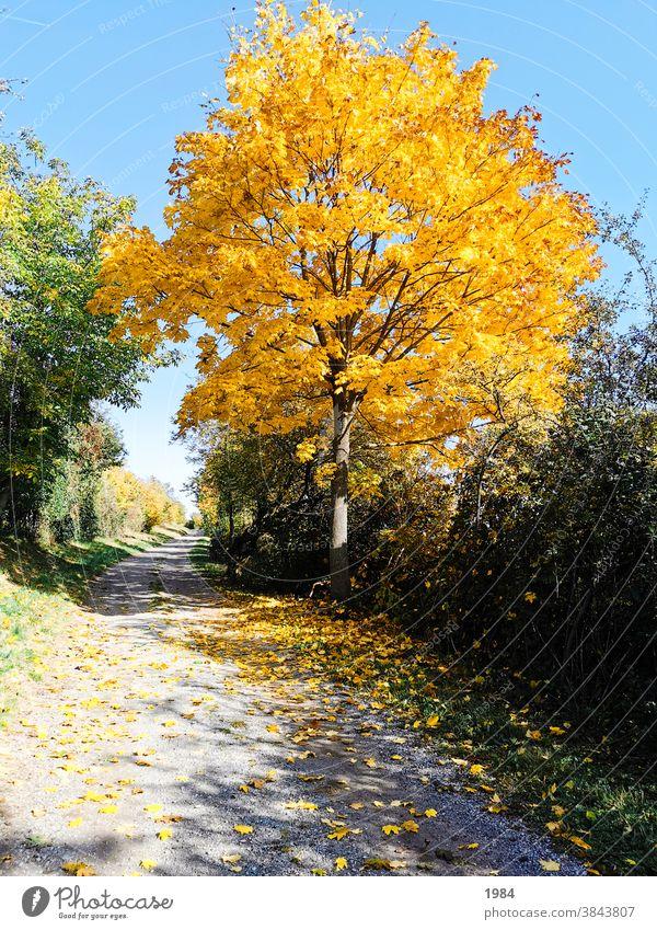 autumn #autumn Yellow Nature Lanes & trails Tree Bwum Colour photo Deserted Landscape Exterior shot Autumn Autumnal Environment Autumnal colours Early fall