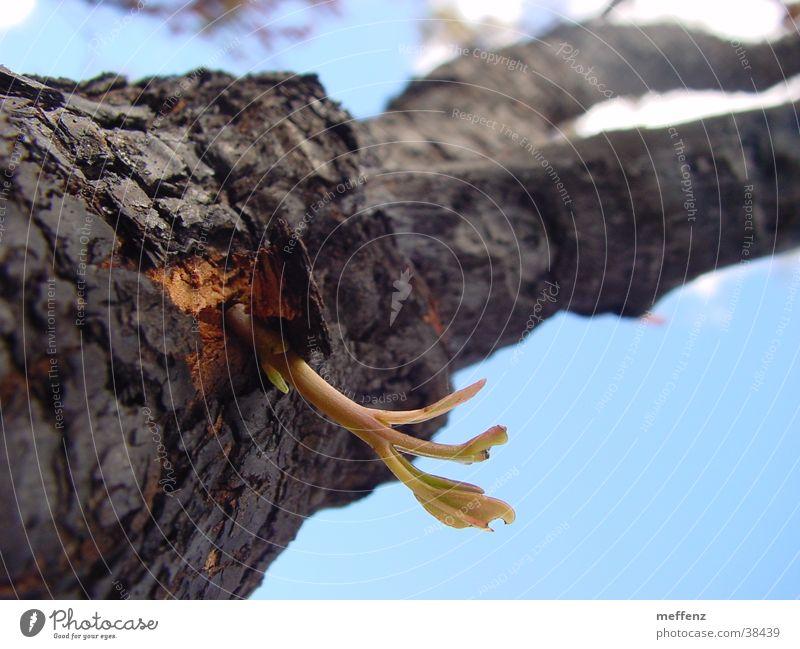 nature rules Tree Breach Beginning Renewal Shoot Plantlet Success Blaze