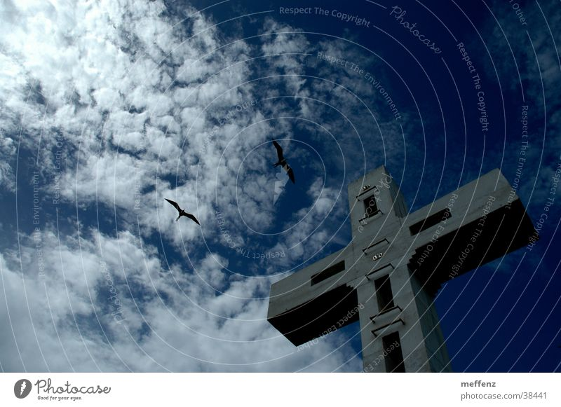 cross flight Swallow Crucifix Religion and faith House of worship Back albatross