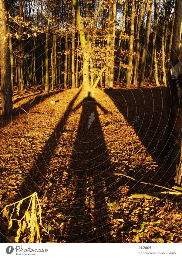 Shadowman_1 Forest Tree Visual spectacle Shadow play Clearing
