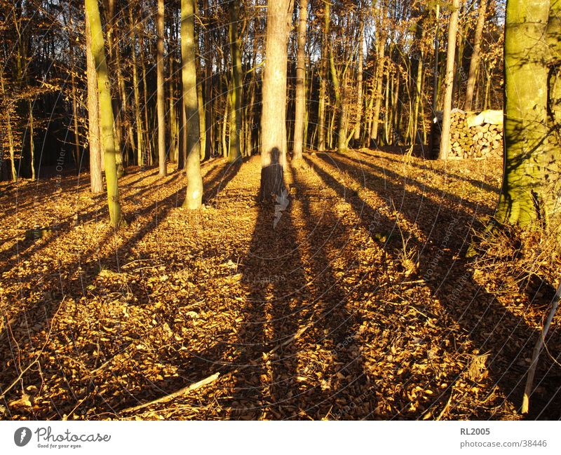 Tree Forest Floor covering Clearing Shadow play