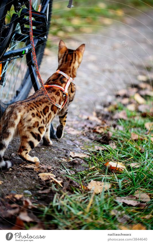 Cat goes on a trip leaves Pet Walk the dog Wait excited Watchfulness Discover Hunting Mysterious Idyll Colour photo Love of animals Self-confident Soft