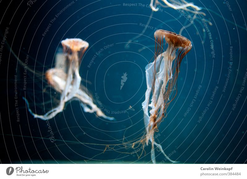 Water dance. Swimming & Bathing Esthetic Elegant Serene Jellyfish Aquarium Fishkeeping Colour photo Artificial light Blur Shallow depth of field