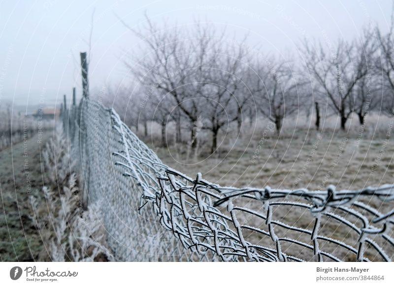 Landschaft mit Zaun im Winter Maschendrahtzaun Rauhreif Obstgarten Weingarten Winterlicht Landwirtschaft Nebellandschaft Kälte Frost tristesse einsam Einsamkeit