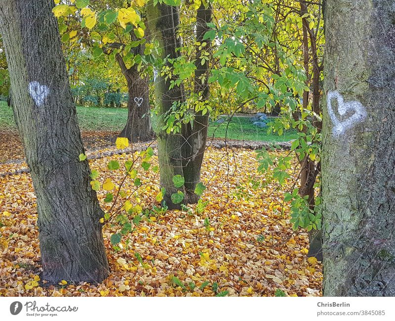 Trees in autumn with painted white hearts trees cuddle Nature Forest Exterior shot Tree trunk Environment Green Day Autumn Woodground Colour photo Forest walk