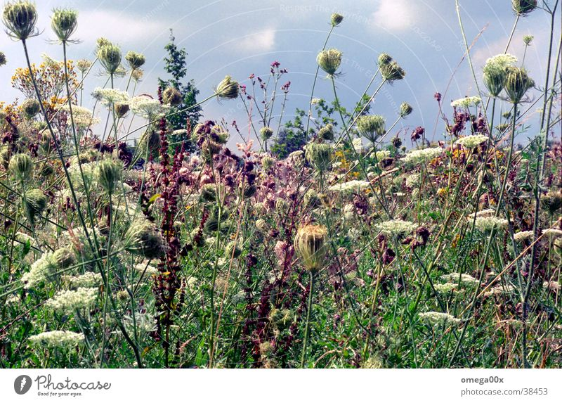 uncontrolled growth Authentic Habitat Nature Plant Colour Wild animal Natural