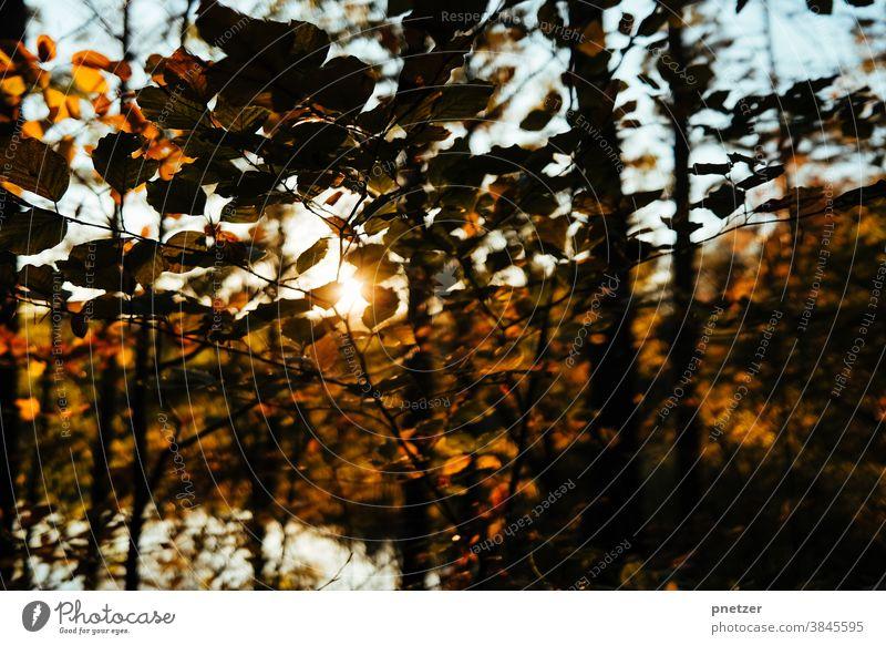 autumnal Autumn Leaf Tree Nature Sun Exterior shot Sunlight Forest Environment Landscape Sunbeam warm