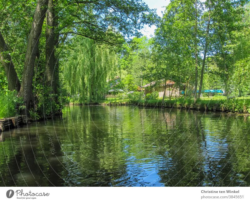 Canoeing in the Spreewald on a sunny day in May Water Pea green Reflection Green Blue Sunlight enchanted Peaceful Calm idyllically Germany Waterway trees Bushes