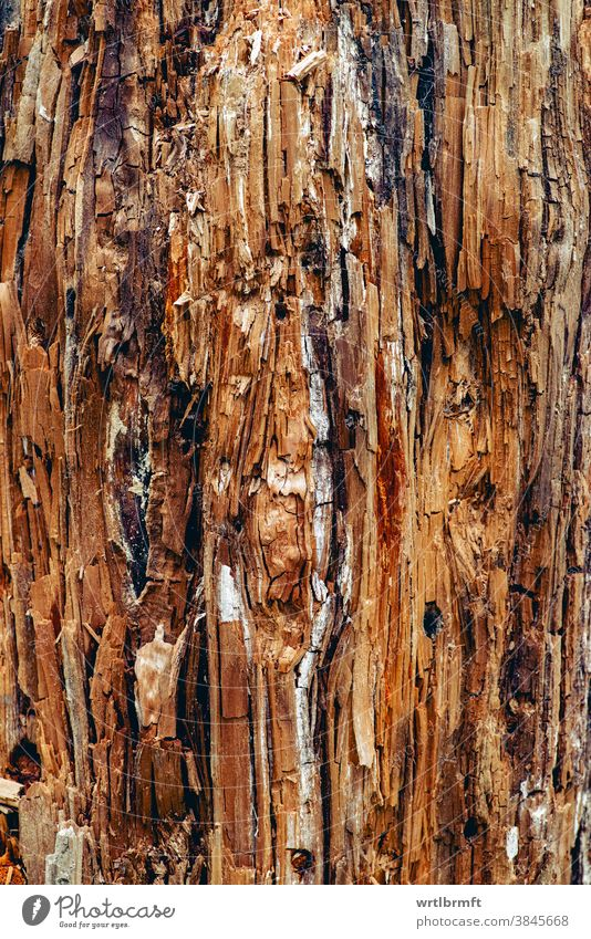 Artistic abstract surface of an old wooden tree trunk interesting warm cozy organic firewood growth color detail wall board retro dark decorative forestry