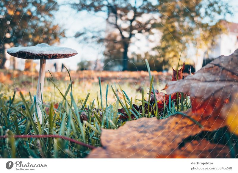 Smallest attraction in Berlin: mushroom in autumn Trip Nature Environment Sightseeing Plant Autumn Beautiful weather Acceptance Autumn leaves Autumnal colours