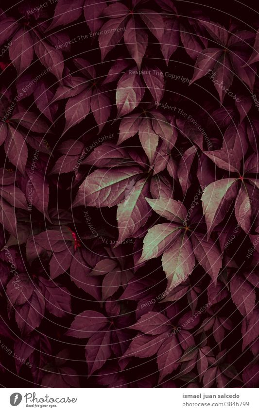 red plant leaves in the nature in autumn season leaf garden floral natural foliage decorative decoration abstract textured freshness outdoors background beauty