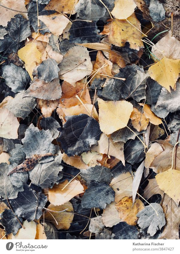 leaves in black brown yellow Autumn Autumn leaves Leaf Autumnal Autumnal colours Nature Colour photo Exterior shot Deserted Early fall Day Tree Autumnal weather