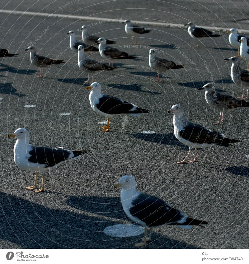 lunch break Nature Summer Beautiful weather Street Animal Wild animal Bird Animal face Wing Seagull Group of animals Flock Observe Stand Wait Together Curiosity