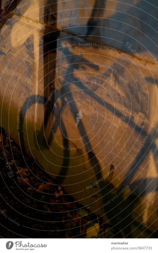 ghost bike Bicycle Shadow Bridge Sustainability neat salubriously Nature Ecological Frame Wheel Handlebars Saddle Brakes Virtual transient Commute cycle path
