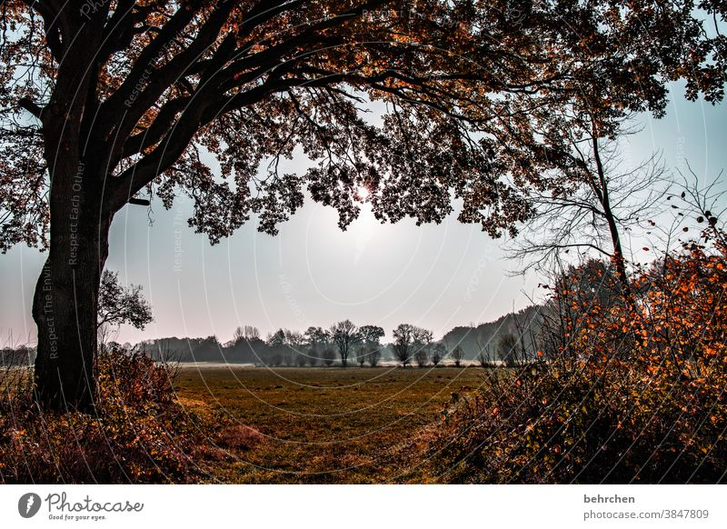 autumn silence Autumnal landscape leaves Autumnal weather falling leaves Sunlight Contrast Light Exterior shot Colour photo pretty Fantastic Forest Bushes Leaf
