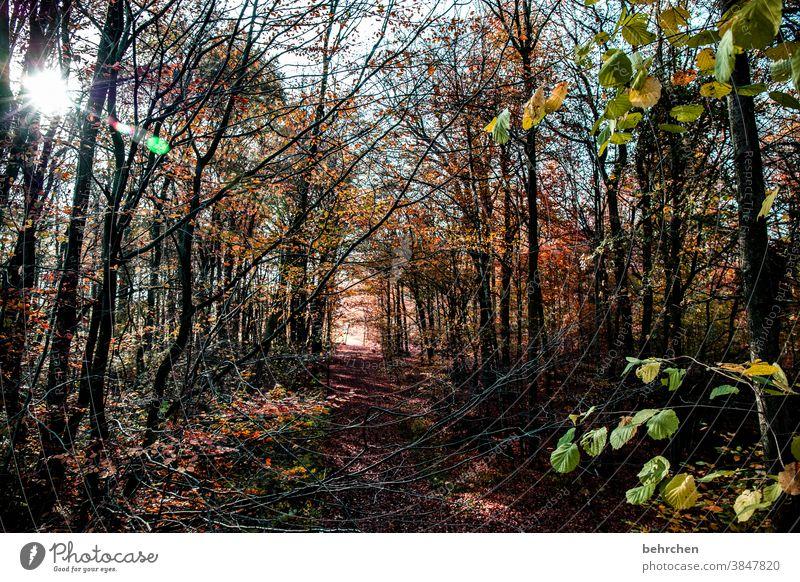 ray of hope Autumnal landscape Autumnal weather leaves Automn wood Sunbeam Idyll Blue sky Sky autumn walk Autumnal colours autumn mood Seasons Autumn leaves
