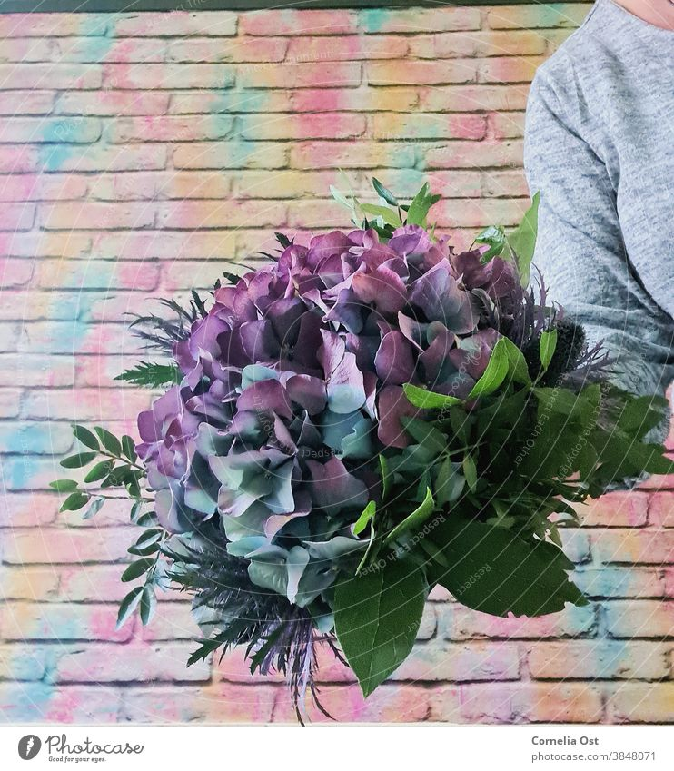 Large hydrangea blossom tied into a bouquet Flower Nature Blossom Plant Close-up Detail Colour photo Blossoming Violet Shallow depth of field Bouquet Fragrance