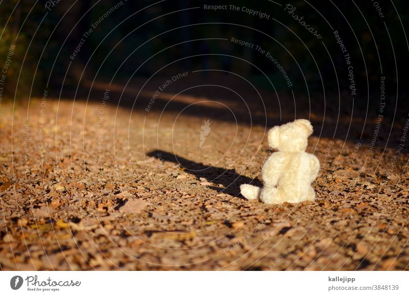 The winner takes it all Teddy bear teddy Bear Toys Brown Cuddly toy Infancy Sit Day Colour photo Loneliness Playing Nature Tree chill Sleep bearlin Animal
