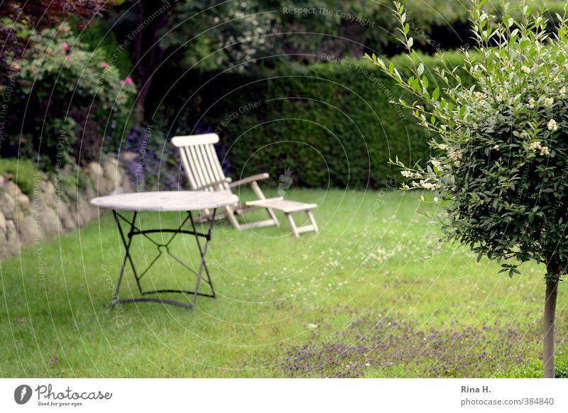 waiting Plant Summer Tree Hedge Garden Meadow Relaxation Wait Green Exterior shot Outdoor furniture Wooden table Deckchair Colour photo Deserted
