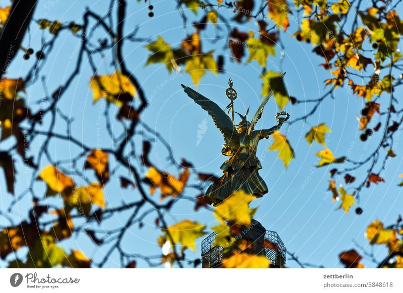 Victory Column, back view through autumn foliage Evening Tree Berlin leaf gold Monument Germany Twilight else Closing time Figure Gold Goldelse victory statue