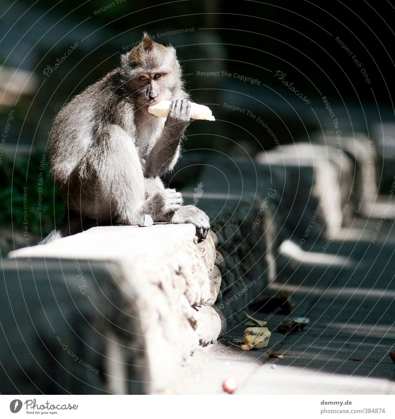 Nature Animal Face Wall (barrier) Freedom Gray Stone Eating Body Sit Observe Vension Curiosity Living thing Pelt To feed